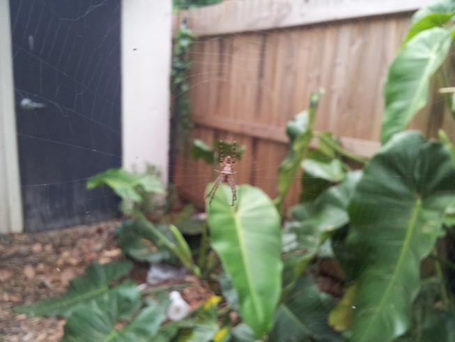 spider door